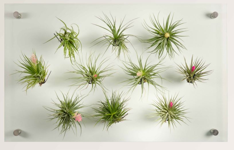 Airplant panel